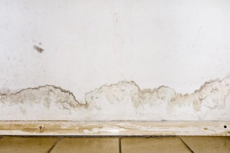como eliminar humedad de la pared