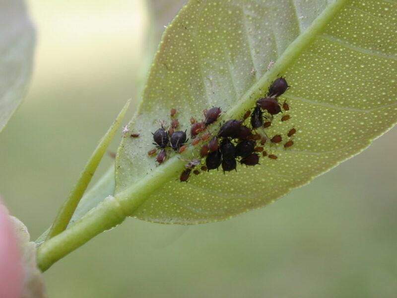 eliminar plagas plantas