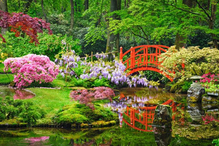 color del jardín
